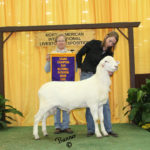 Champion Ram 2015 NAILE, sired by Rebel