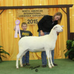 Junior Champion Ewe 2015 NAILE, Reserve Champion in the Jr Show